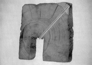 Dendrochronologie beruht auf den Jahresringen in Baumstämmen. (Quelle: denkmalpflege.bs.ch)