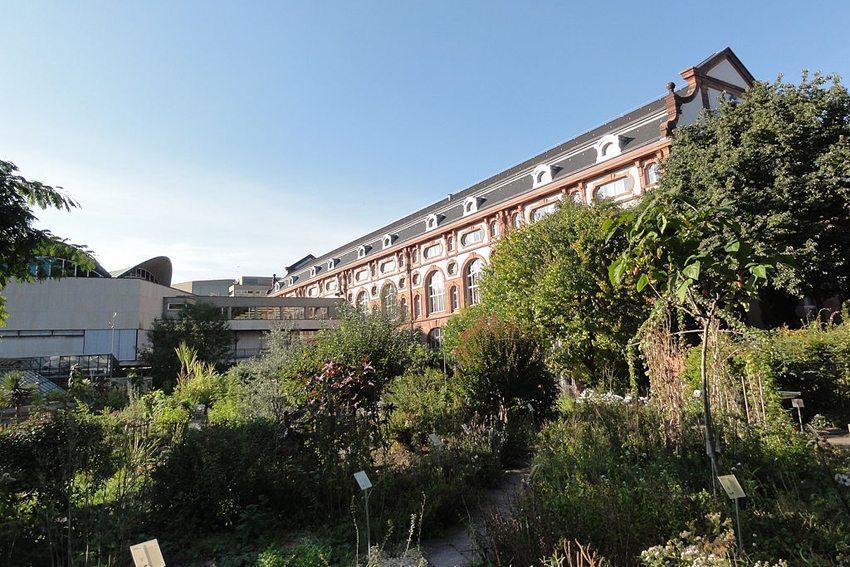 Botanischer Garten der Universität Basel (Bild: Mattes, Wikimedia, CC)