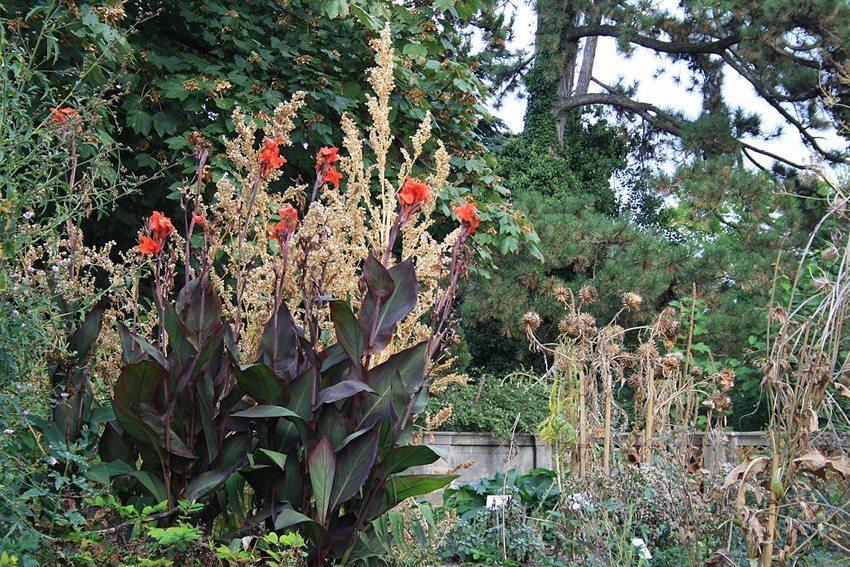 """""""Gessner–Garten"""" im Alten Botanischen Garten """"zur Katz"""" in Zürich (Bild: Roland zh, Wikimedia, CC)"""