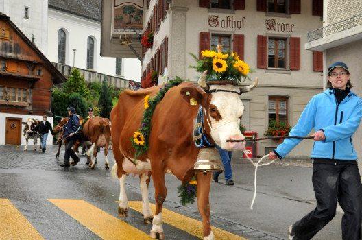 Viehschau in Luthern (Bild: © Pius Häfliger, Luthern)