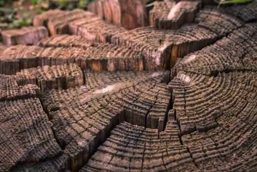Dendrochronologie bestimmt mithilfe der Jahresringfolge das Alter von Bäumen. (Bild: Skumer – shutterstock.com)