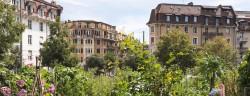 GAJ_Plantage_Harpe_Lausanne_© James Batten_SHS