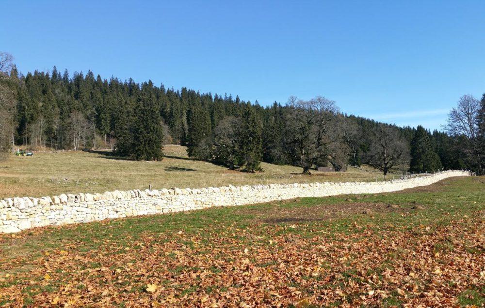 """Mehrere hundert Metern Trockenmauern konnten entlang des """"Chemin des pionniers"""" (Gemeinde Val-de-Ruz NE) wieder aufgebaut werden. (Bild: © SL-FP)"""