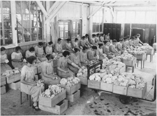 Gemüseverarbeitung, August 1925 (Bild: © Archiv Givaudan)