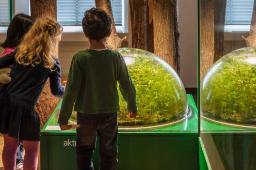 Die Kinder entdecken Geheimnisse der Erde und Biologie im Natur-Museum. (Bild: Schulthess-foto.ch)