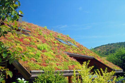 feature post image for Tipps für eine ökologisch wertvolle Dachbegrünung